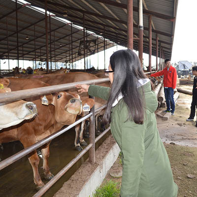A woman pets the nose of a cow in a dairy barn