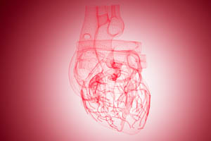 computer-generated image of a heart