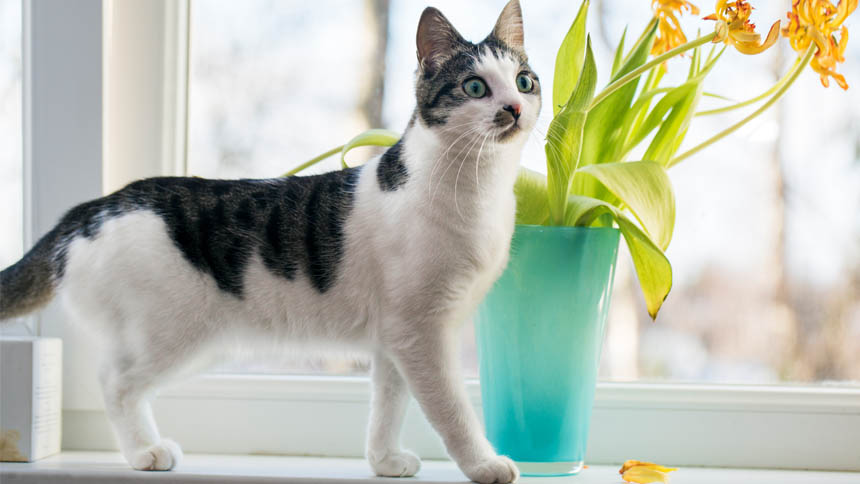 A black and white cat stands on a windowsill next to a vase of cut flowers