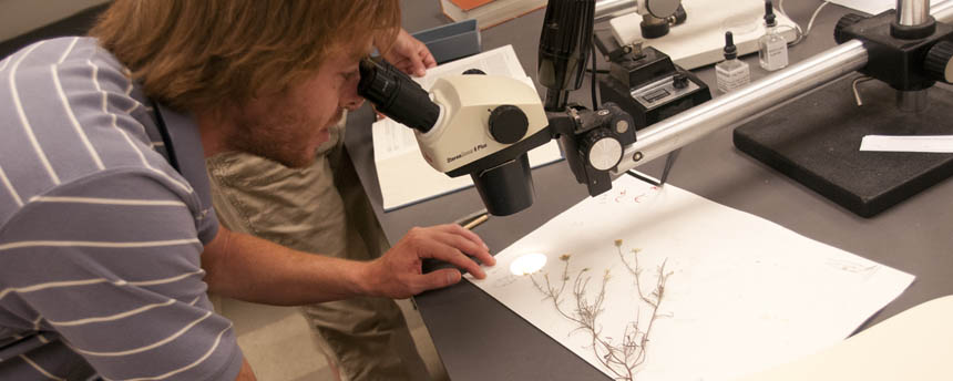 A young man looks through a microscope at a herbarium specimen of a wildflower