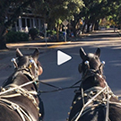 Two horses walking through campus.