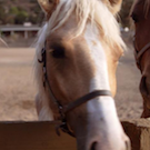 Catalina horse on Santa Cruz Island