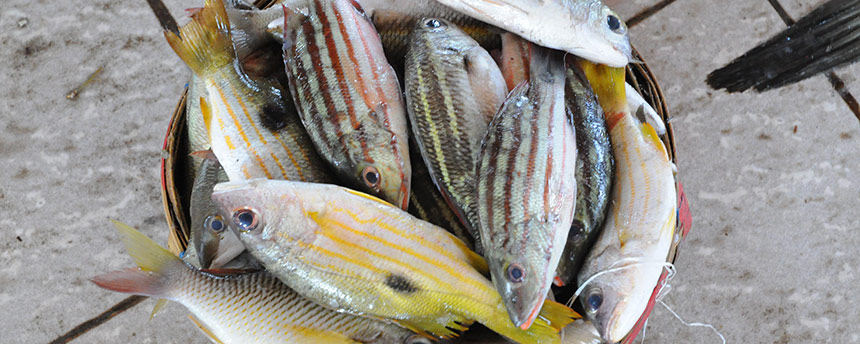 A number of striped fish in a basket