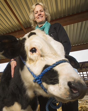 Woman stands with black and white calf